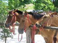 Rhodes Horseback Riding